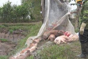 Nhiều tỉnh lo hết tiền vì dịch tả lợn, cần gấp 1.200 tỉ đồng từ T.Ư