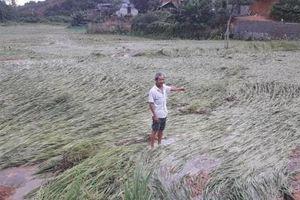 Thái Nguyên: Cần kiên quyết xử lý đơn vị khai mỏ vi phạm về bảo vệ môi trường