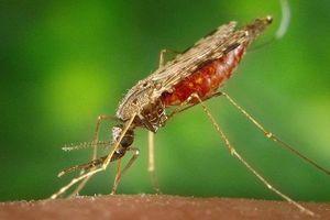 Bệnh sốt xuất huyết: Dấu hiệu nhận biết và cách phòng tránh