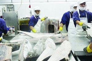 Cá ngừ Việt Nam vẫn khó vào Hàn Quốc