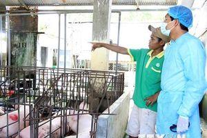 Bình Thuận - địa phương thứ 54 xuất hiện ổ dịch tả lợn châu Phi