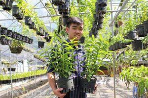 Vườn lan trầm rồng đỏ đẹp như mơ của hot boy Lâm Đồng