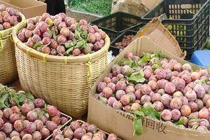Mận - trái cây giải nhiệt mùa hè