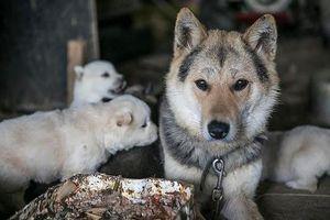 Hàn Quốc đóng cửa chợ thịt chó nổi tiếng