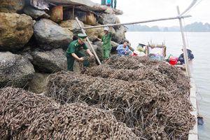 Quảng Ninh: Bắt giữ phương tiện chở 30 nghìn dây hàu giống nhập lậu