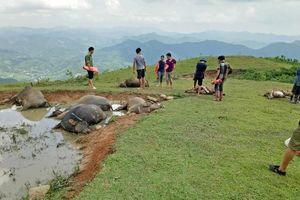Lạng Sơn: Sét đánh chết 9 con trâu, thiệt hại hàng trăm triệu đồng