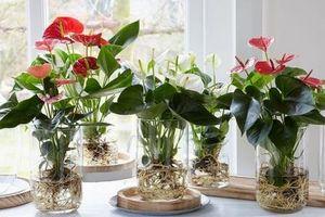 5 loài hoa trồng trong cốc nước vừa đơn giản vừa đẹp, lại dễ chăm sóc