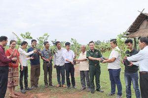 Cây trái Quảng Trị mang màu xanh no ấm tới Sê Pôn (Lào)