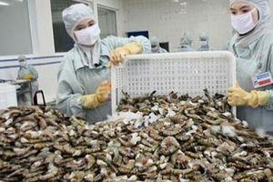 Chưa tận dụng tốt VKFTA, xuất khẩu tôm sang Hàn Quốc giảm trên 20%