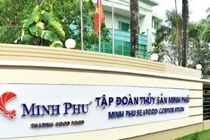 Tôm nhập từ Ấn Độ chiếm khoảng 10% tổng lượng tôm đầu vào sản xuất của Minh Phú