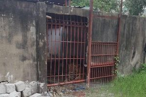 Chủ cơ sở nuôi nhốt hổ cắn đứt 2 cánh tay người tại Bình Dương từng bị phạt tù