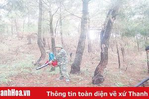 Thực hiện các biện pháp cấp bách giữ rừng trong mùa nắng nóng