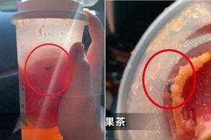 Khách phát hiện ruồi bơi trong trà sữa, cửa hàng lập tức bị đóng cửa