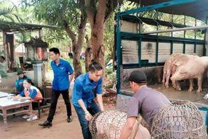 Giá lợn hơi có chiều hướng tăng mạnh, người dân phấn khởi