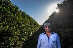 Giá cà phê thấp, nông dân Brazil vẫn ồ ạt mở rộng trang trại