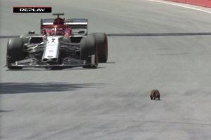 Tay đua F1 bất ngờ trước vị khách lạ