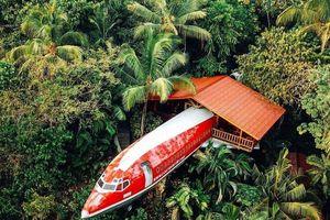 Thức giấc giữa rừng trên chuyến bay không bao giờ khởi hành