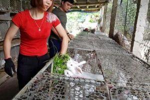 Mỗi tháng lãi hơn 10 triệu đồng nhờ nuôi đàn thỏ trắng New Zealand