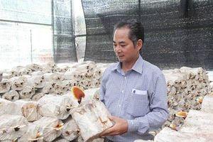 Làm giàu ở nông thôn: Tiền tỷ 'mọc ra' từ những cành củi khô