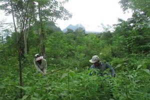 Hiệu quả quản lý, bảo vệ, phát triển rừng ở Sơn La