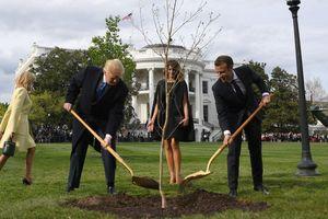 Cây sồi do TT Trump và Macron trồng ở khuôn viên Nhà Trắng đã chết