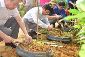 Thừa Thiên - Huế: Lan tỏa phong trào 'Ngày Chủ nhật xanh'