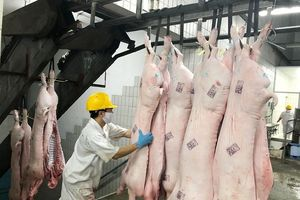 Saigon Co.op kiểm soát chặt nguồn thịt heo đưa vào siêu thị