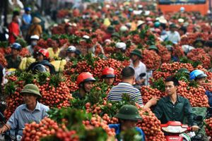 Giá vải thiều đạt ngưỡng 65 nghìn đồng/kg, Bắc Giang tiêu thụ gần 40.000 tấn