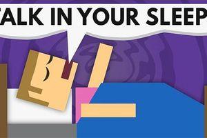 Nguyên nhân con người nói chuyện trong khi ngủ
