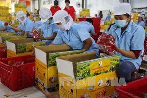 Việt Nam có hơn 10 mặt hàng nông sản xuất khẩu chủ lực