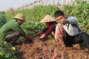 Đào tạo nghề cho người lao động tại Phú Xuyên: Bám sát nhu cầu người học
