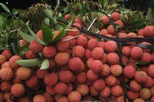 Nhiều trái cây lần đầu xuất khẩu chính ngạch Trung Quốc