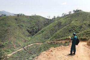 Công ty TNHH MTV Lâm nghiệp Hoành Bồ (Quảng Ninh): Sẽ trồng bổ sung cây bản địa vào những vị trí trồng sai quy trình