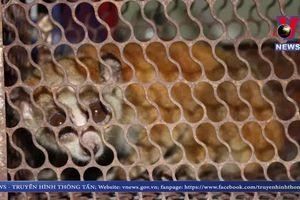 Góc nhìn Vnews ngày 11/6/2019 - Công tác bảo tồn động vật quý hiếm nhiều bất cập