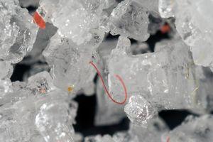 Mỗi năm một người nuốt vào bụng ít nhất 50.000 hạt vi nhựa