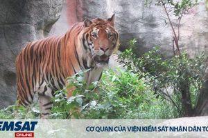 Còn lỗ hổng trong quy định về việc nuôi nhốt hổ