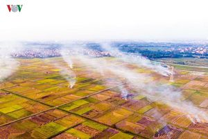 Đốt rơm rạ ảnh hưởng chất lượng không khí Hà Nội