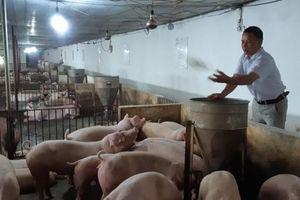 Bắc Giang: Giá lợn hơi vượt mức 40.000 đồng/kg, người nuôi có lãi