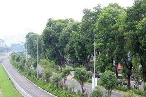 Những 'kho tài sản thiên nhiên' giữa Thủ đô nắng nực