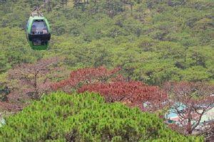 Lâm Đồng: Sẽ khôi phục diện tích rừng bị phá