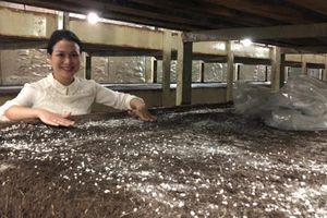 Dân Hà Nội sành ăn nấm Mỡ Đà Lạt sản xuất bằng công nghệ Canada
