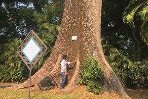 Ly kỳ những 'cụ' cây quý hiếm ở vườn thú 155 tuổi tại VN
