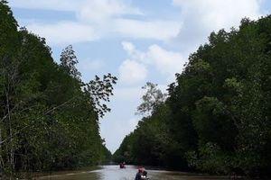 Phát hiện hàng loạt sai phạm tại Vườn Quốc gia Mũi Cà Mau