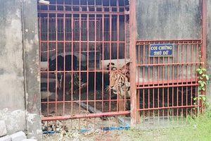 Nhập nhèm mục đích nuôi thú hoang dã: Ngăn thú dữ xổng chuồng