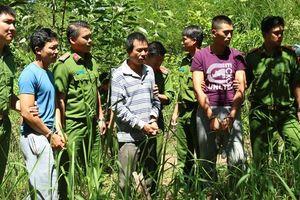 Bắt thêm 1 đối tượng liên quan vụ đầu độc 10ha rừng thông tại Lâm Đồng