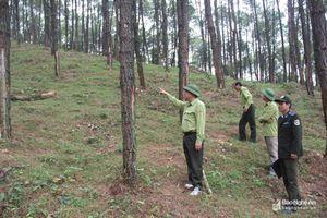 Giao đất, giao rừng gắn với phòng, chống cháy rừng