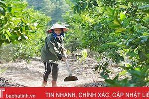 Người dân miền núi Hà Tĩnh dậy từ 3 giờ sáng bơm nước chống hạn cây ăn quả