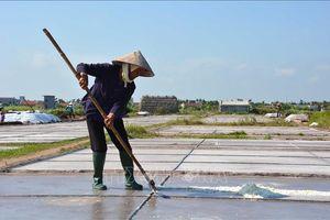Thu nhập thấp, diêm dân bỏ hoang ruộng muối