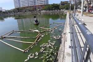 Cá chết lềnh bềnh trên hồ đại gia 'Dũng lò vôi' định xử lý ô nhiễm