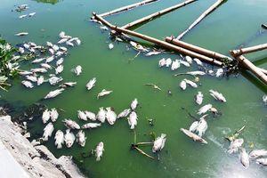 Đà Nẵng: Cá chết nổi quanh hồ Thạc Gián